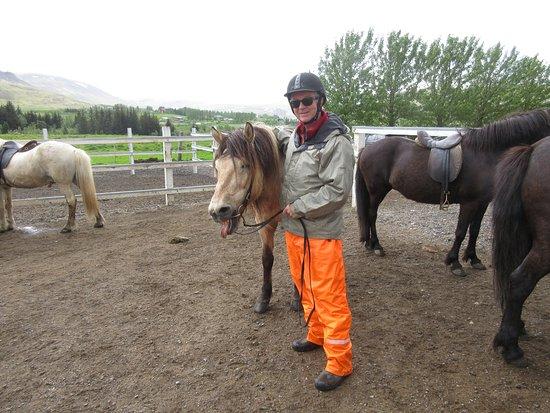 Mosfellsbaer, ไอซ์แลนด์: Laxnes Horse Farm