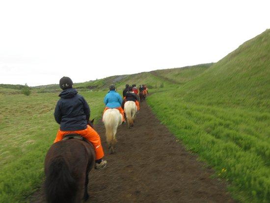 Mosfellsbaer, Islandia: Laxnes Horse Farm