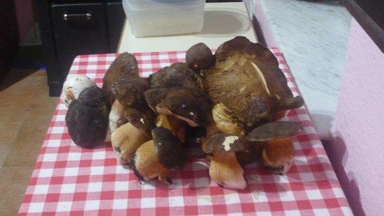 Civitella Paganico, Italy: funghi porcini tipici del nostro bosco..buonissimi