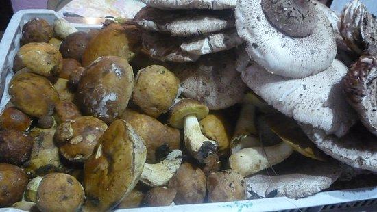 Civitella Paganico, Italy: funghi misti per il sugo