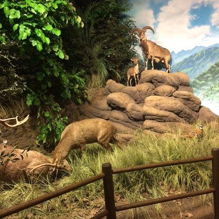 Salina, Канзас: Natural Museum scenario
