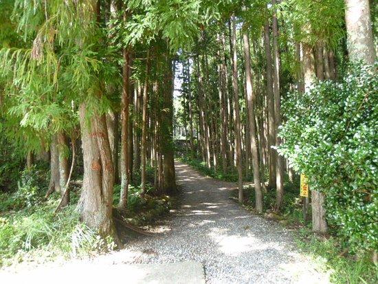 كينكي, اليابان: 熊野本宮大社までもう少しのところの杉並木