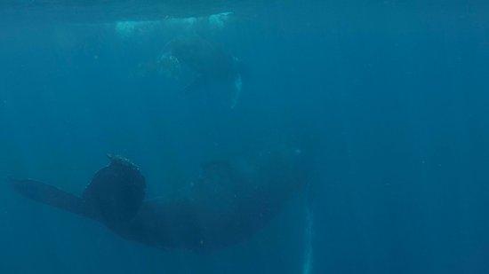 Playa Flamingo, Costa Rica: Humpback whales