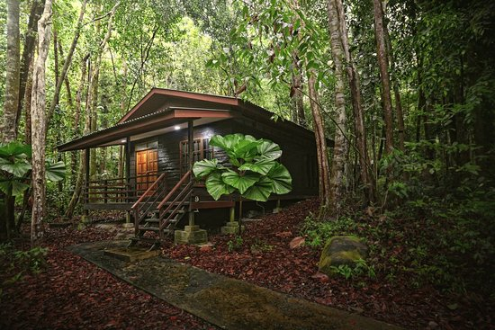 เปอร์ไมเรนฟอเรสรีสอร์ท: A Cabin