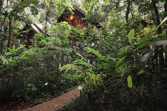 Permai Rainforest Resort: The Treehouses