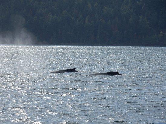 Richmond, Kanada: Double Humpbacks :)