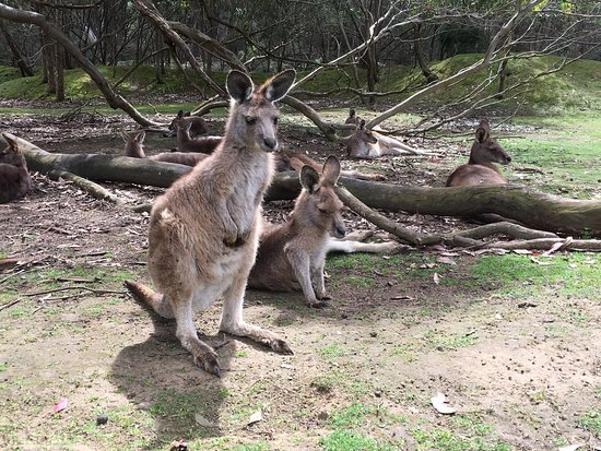Bellerive, ออสเตรเลีย: photo1.jpg
