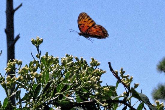 Johnson Beach: Monarch along nature trail