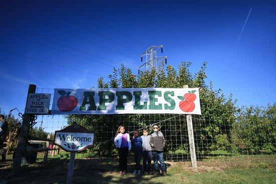 Warwick, Νέα Υόρκη: Apples