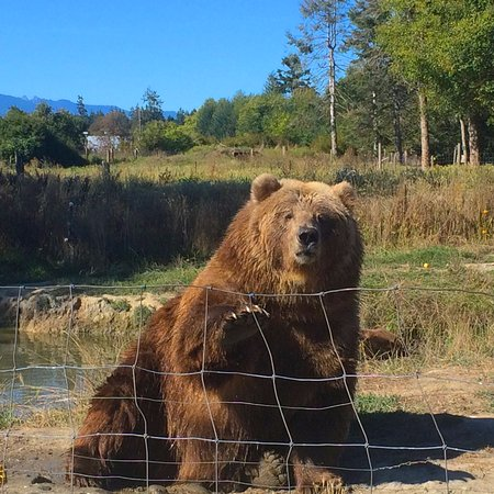 Sequim, WA: Bear Hi