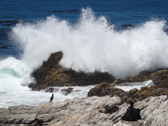 Betty's Bay, África do Sul: photo0.jpg