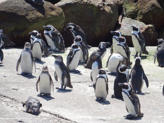 Betty's Bay, África do Sul: photo3.jpg