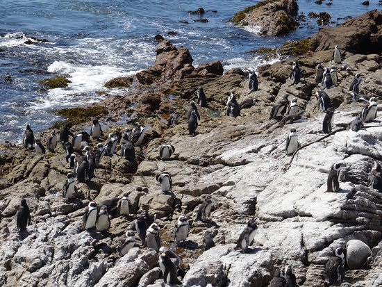 Betty's Bay, África do Sul: photo4.jpg
