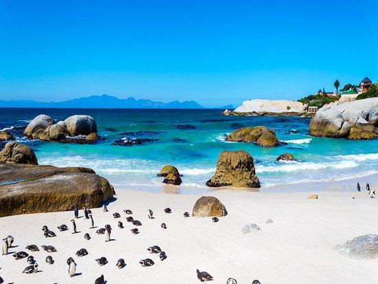 Africa Elite Travel African Penguin Colony Boulders Beach Cape Peninsula Full Day Tour