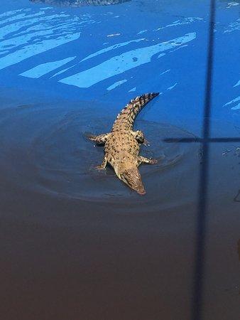 Palm Cove, Australien: photo4.jpg