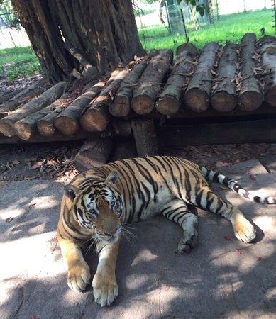 Shenzhen Wild-life Zoo