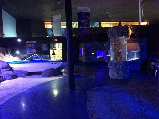 Starfish Tank Photo De Austin Aquarium Austin Tripadvisor