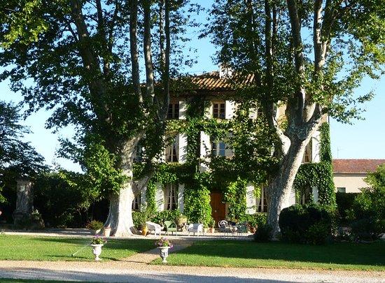 Aubignan, France : la maison et ses platanes