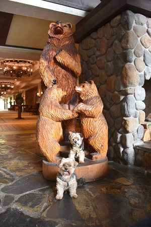 Fish Camp, Californie : Our dogs had a great time at the Tenaya Lodge!