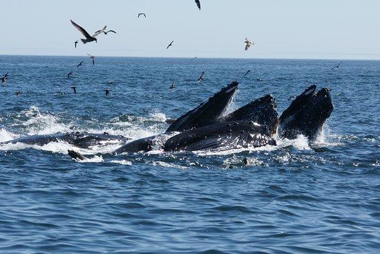 Sub Sea Tours and Kayaks: Buckelwale