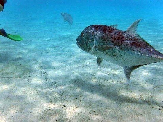 Muri, Islas Cook: Achtung, der große Fisch kommt