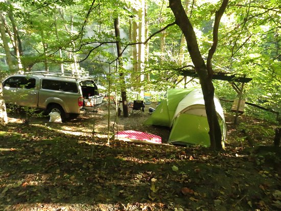 Moonshine Creek Campground: Our campsite from the road