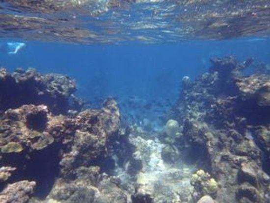 Christiansted, St. Croix: Coral reef at Buck Island