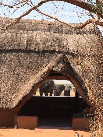 Hwange National Park, Zimbabwe: photo1.jpg