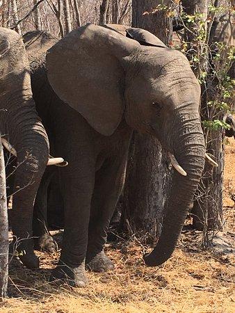 Parque Nacional de Hwange, Zimbabue: photo1.jpg