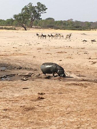 Parque Nacional de Hwange, Zimbabue: photo2.jpg
