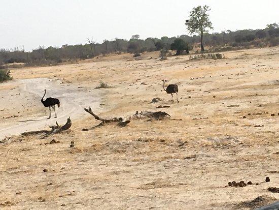 Parque Nacional de Hwange, Zimbabue: photo3.jpg