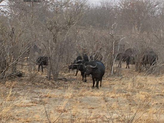 Parque Nacional de Hwange, Zimbabue: photo4.jpg