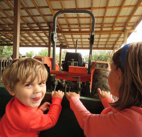Flat Rock, NC: Grandson loved the tractor pulling us on our hayride
