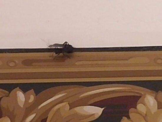 Berlin, NJ: Cockroach alive in my room
