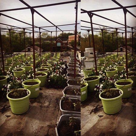 Milford, MI: Palate Rooftop Garden