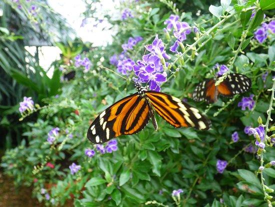 Jardins des papillon hunawihr alsace france foto van for Jardin hamel papillon 2016