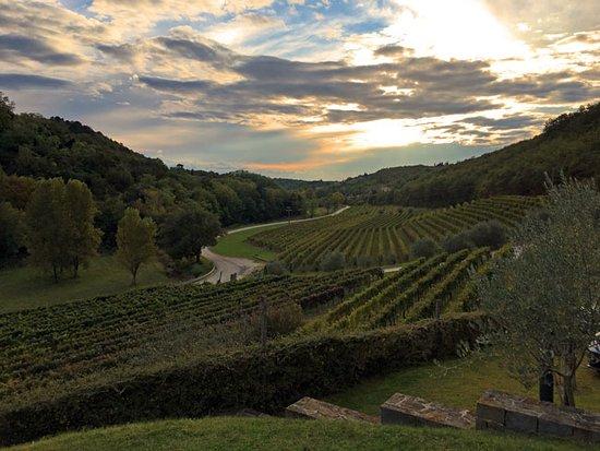 Momjan, Kroatia: Kozlovic Winery