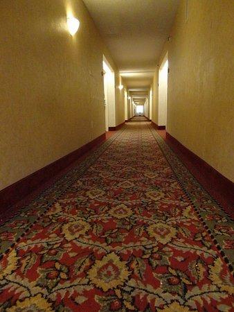 Hampton Inn Tampa-Veterans Expwy (Airport North): 2nd Floor hallway