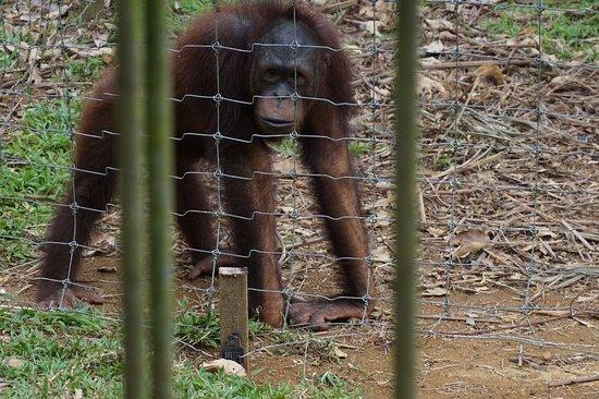 Semanggol صورة فوتوغرافية