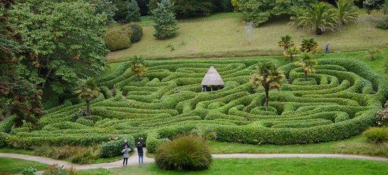 Falmouth, UK: The Maze at Glendurgan Gardens