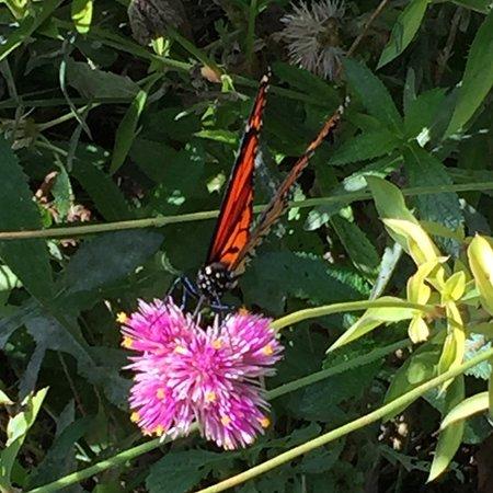 Wayne, PA: Butterflies gathering nectar