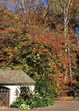 Wayne, PA: Changing colors near the garden shed