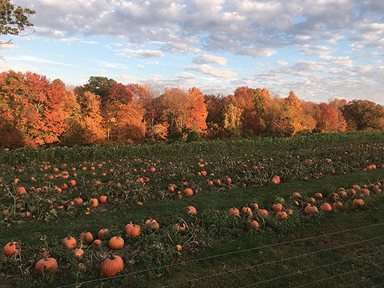 ‪‪Woodstock‬, كونيكتيكت: Fall foliage over the pumpkin patch at Devon Point Farm‬