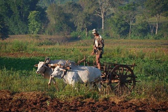 Kalaw, Burma: Farmer on the fields