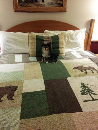 Sunnyside Knoll Resort: our little pooch loved his stay.