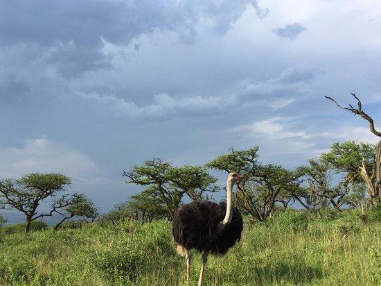 Pietermaritzburg, Sudáfrica: photo3.jpg