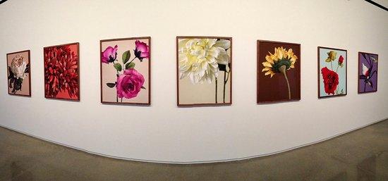 Rockland, ME: Lauren Henkin - Second Nature--part of the exhibit