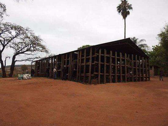 Hazyview, Afrique du Sud : Corrales de Elephant Whispers