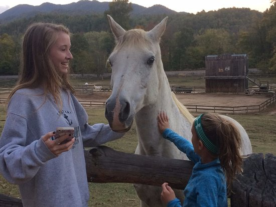 Del Rio, TN: so friendly. they loved the peppermints and carrots. we loved feeding them!