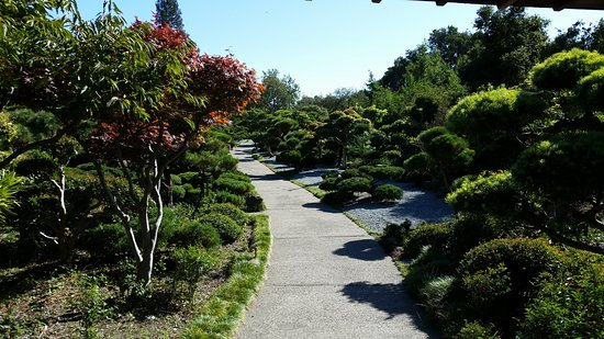 Hayward, CA: Pictures of the Japanese Garden. Pathways are paved
